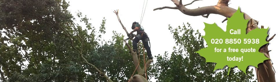 Crown Tree Surgeons providing  felling, pruning, cutting and stump removal across suburban London.