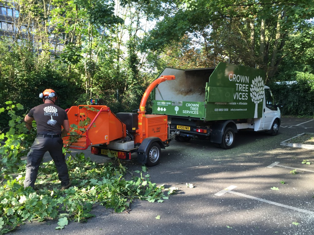 Chislehurst tree removal